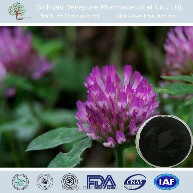 Red Clover extract powder ISOFLAVONE 2.5% CAS 485-72-3 latin source: Trifolium pratense L.