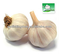 2013 Snow White Natural Fresh Garlic