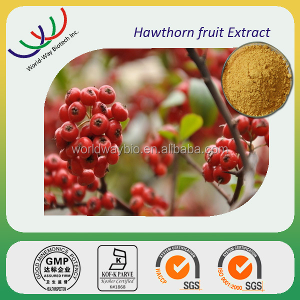 Hawthorn Fruit/Leaf/Flower Extract powder/hawthorn berry extract supplier