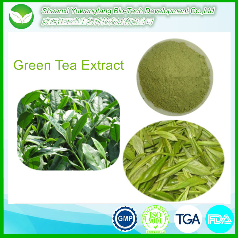 factory directly supply chinese loose green tea extract powder