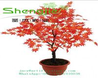 SJLJ0696 hot selling outdoor decorative red artificial tree plant / plastic maple tree