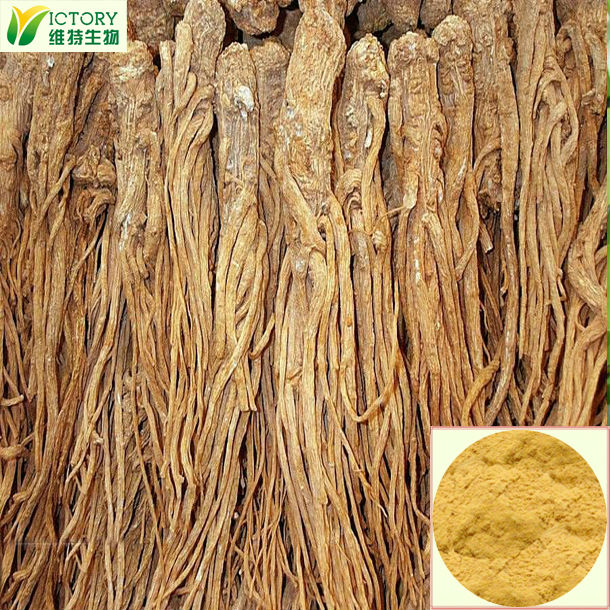 supply angelica root extract with good quality health product for women