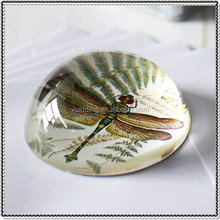 Dragonfly Photo Glass Dome Paperweight for Business Gifts
