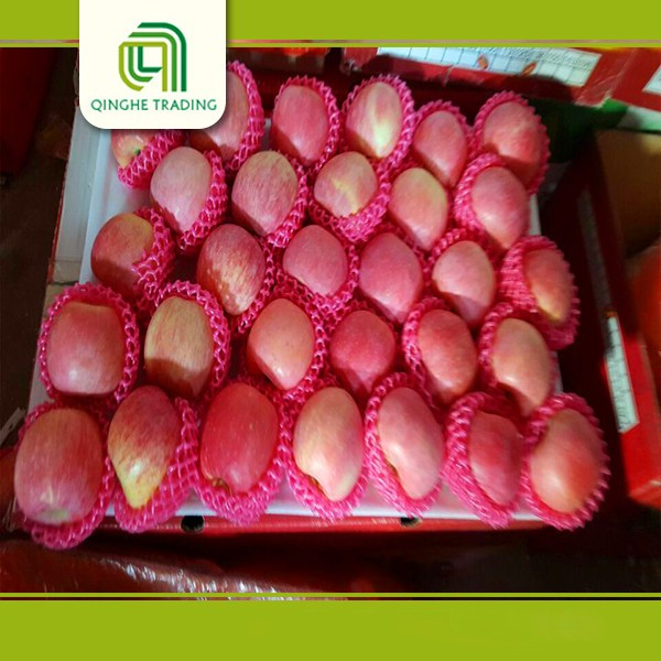 wholesale fresh durian fruit for sale yantai fuji apples from china