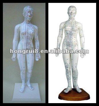 ISO Human Acupuncture Model, Deluxe Acupuncture Female Model 48CM HR-502