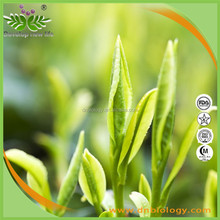 Plant extract Green Tea Extract 98% high quality tea polyphenols with free sample