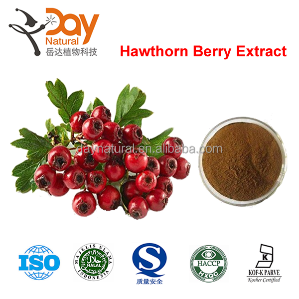 Natural High Quality Hawthorn Berry/Leaf Extract manufacturer