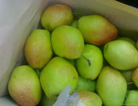 Fresh style and pear type Chinese fresh mature Fragrant Su Pear