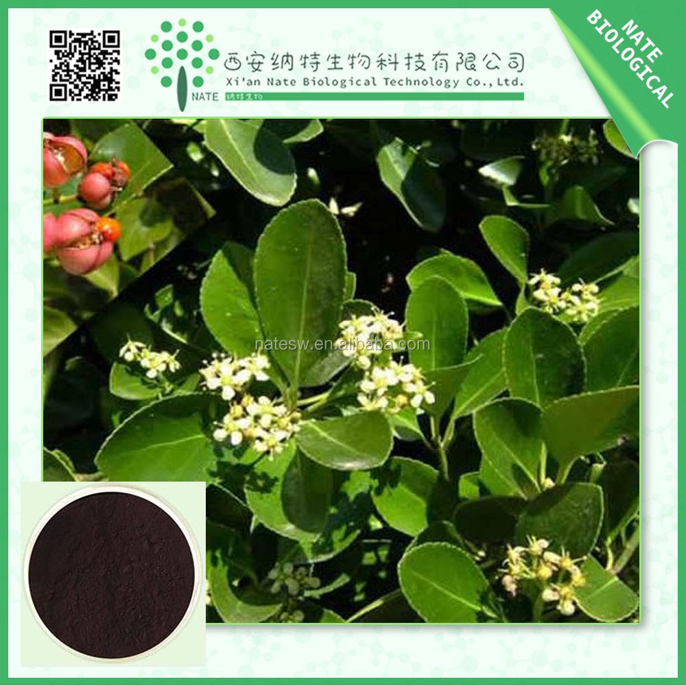 Free sample pure natural Black Cohosh Extract triterpene glycosides 50:1