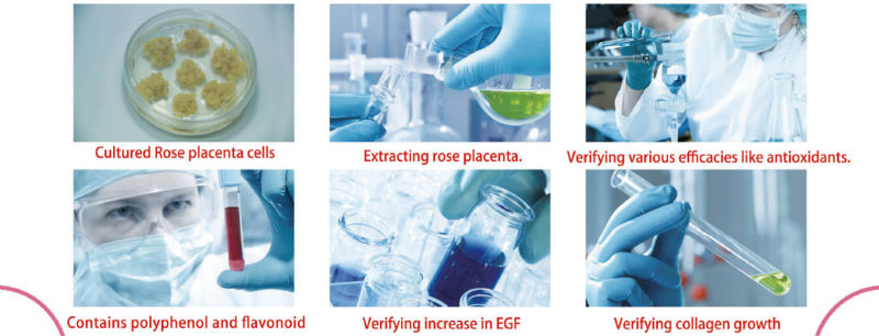 Japanese Rose Placenta Extract Powder As Antioxidant For Health Foods For Increasing EGF, Cell Turnover, Collagen Growth