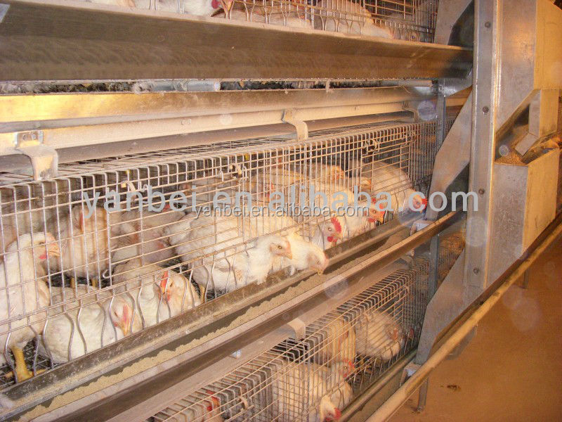 9LCDr-3168 Automatic Broiler Farm Chicken Cage