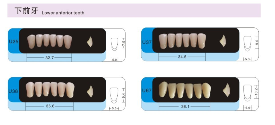 CE and ISO certification! Tube Teeth with Synthetic Resin Composite Teeth