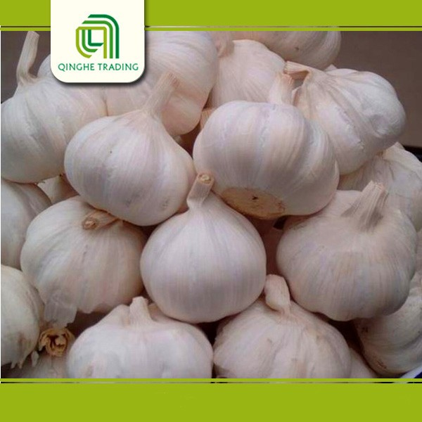 china 2015 fresh garlic price natural wholesale garlic with high quality