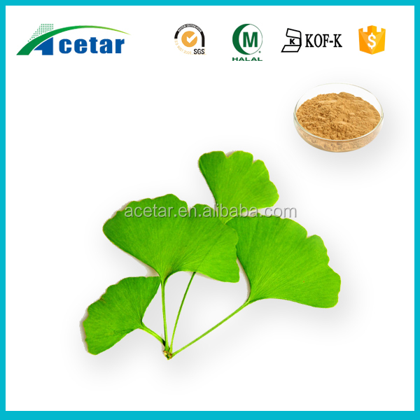 Pure natural herbal ginkgo biloba leaf extract