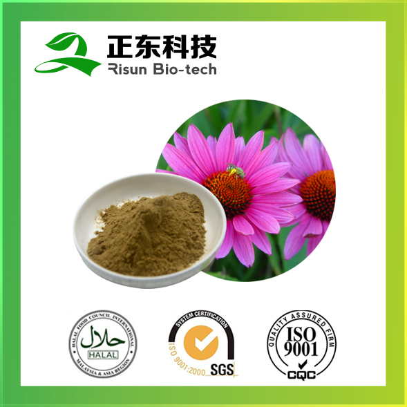 Pure herbs extract powder extract powder 4% chicoric acid Echinacea Purpurea Extract