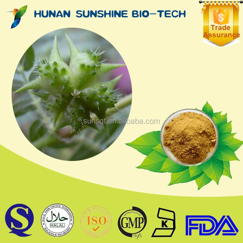wholesale chinese herbal medicine 100% natural herb Tribulus Terrestris P.E. Powder with eye protection function