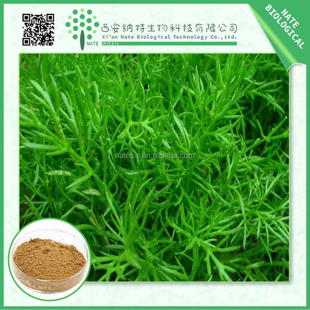 Antioxidants plant extract Rosemary Extract Carnosic acid 10% Carnosic acid 20% powder