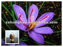 pure natural Saffron Extract