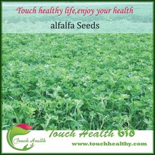 2017 Highly adaptable best quality alfalfa seed for sale