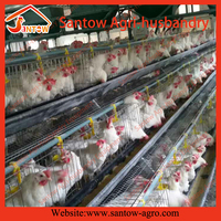 chicken cage for broiler and rabbit quail livestock