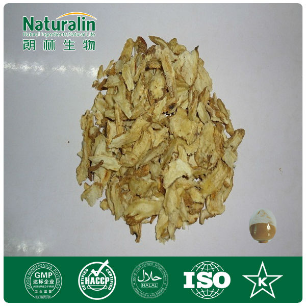 Angelica sinensis/Dong Quai Extract Powder