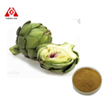 Natural Artichoke Extract 2.5% 5%Cynarin
