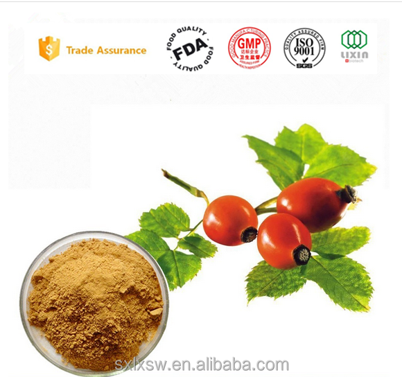 GMP factory direct sale High Quality Natural Rose hip fruit extract rose essentialoil with competitive price
