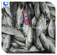 wholesale fishing frozen yellow tail horse mackerel fish