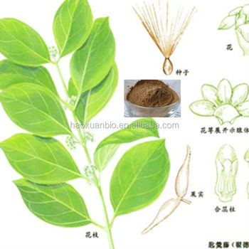 Health Food Gymnema Sylvestre Leaf Extract Powder (4:1 5:1 10:1 20:1)