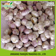 China garlic with competitive price by manufacturer in Jinxiang
