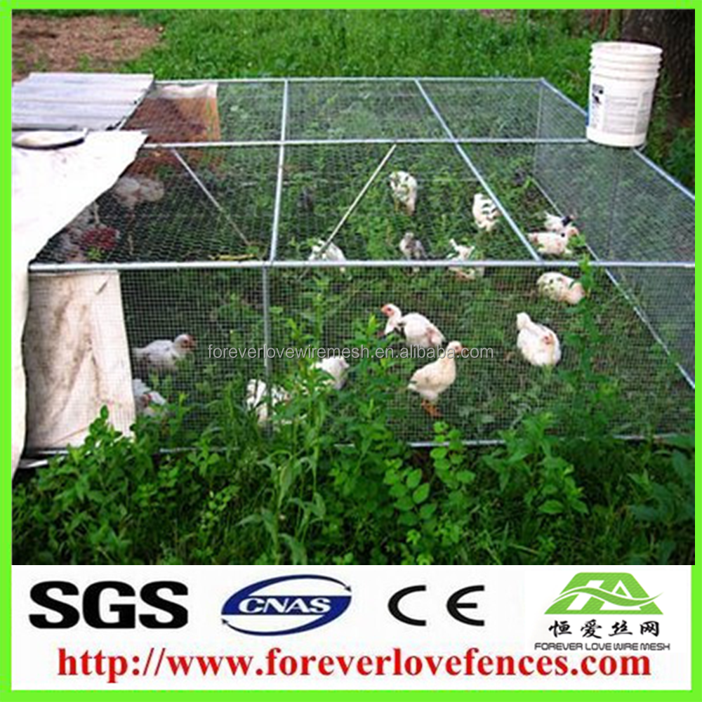 Best price Chicken Wire Mesh for geese/ rabbits and zoo fence