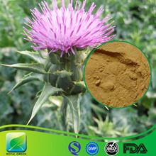 Pure Natural Milk Thistle Plant Extract 85% Silymarin