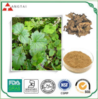 High Quality Black Cohosh Extract with 5% saponins