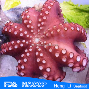High quality whole fresh and frozen octopus vulgaris