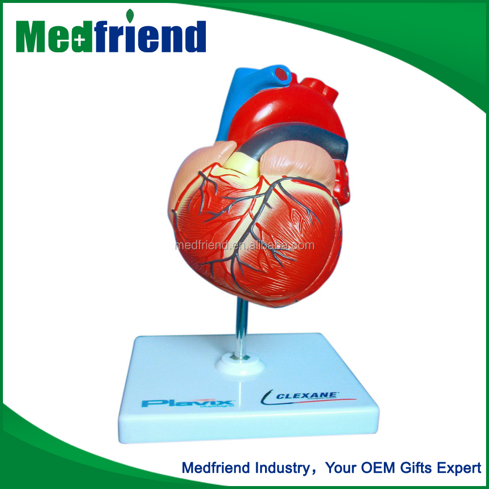 MFM014 China Wholesale Market Agents Human Heart Educational Model