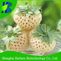 2017 High quality and good looking white strawberry seeds