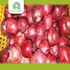 good brand new high quality fresh top red huaniu apples price chinese fruit for wholesales