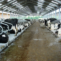 galvanized light steel frame structure cow sheds price per ton