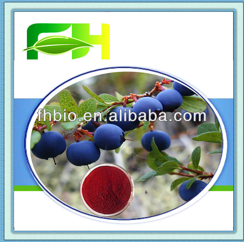 Best Quality Natural Vaccinium Myrtillus P.E.
