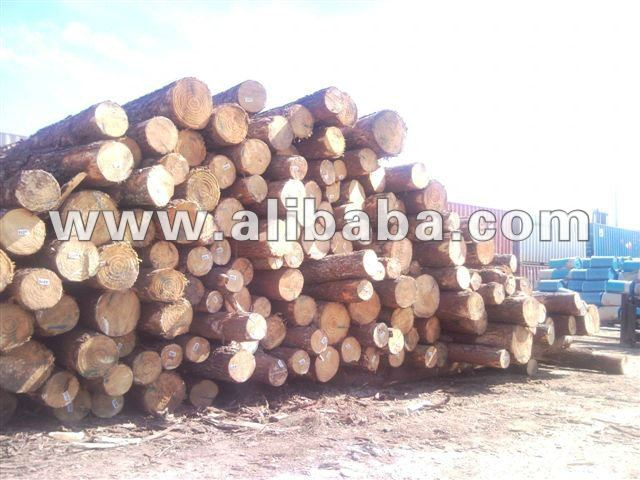 SYP - Southern Yellow Pine Logs