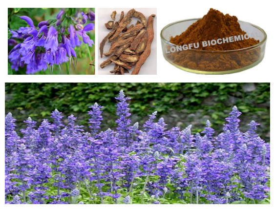 Herbal Extract Salvia Miltiorrhiza Extract /Danshen Extract With Tanshinone II A ,Salvianolic Acid B