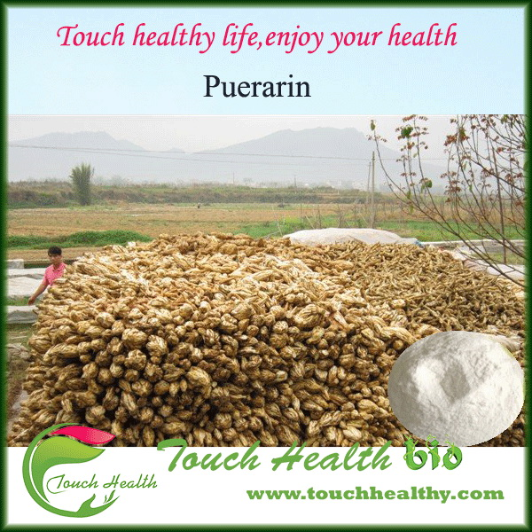 2017 Touchhealthy supply Pure 40% Kudzu Extract Pueraria Root Flavone