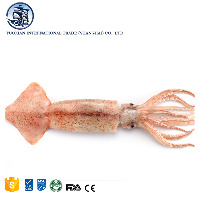 Giant frozen seafood calamari squid for sale