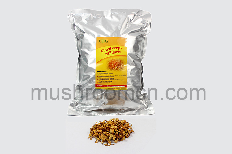 Chinese Health Food Cordyceps Sinensis Fruit Body