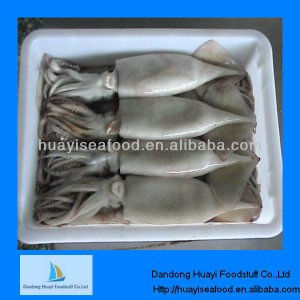 frozen squid seafood