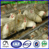 Contact address chicken coop design/ layer chicken battery cage price