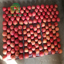 new arrival fresh chinese fruits red fuji apple in China