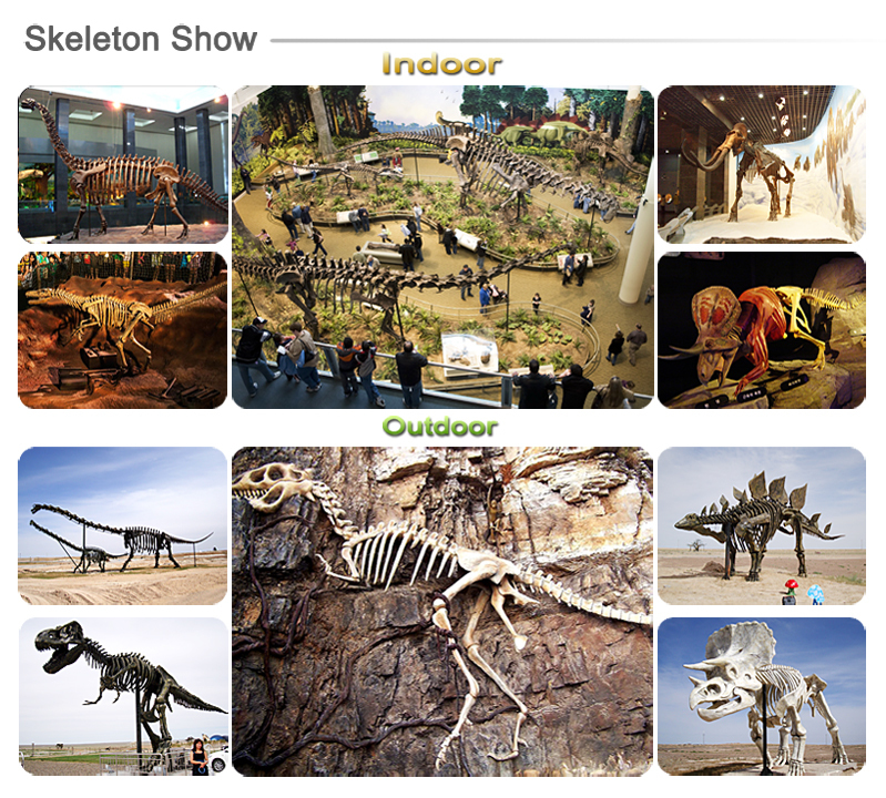 Dinosaur Fossil and Skeleton Replicas