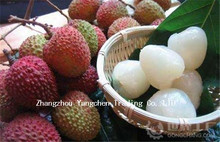 Hot sale ISO certificated tin packing canned lychee fruit