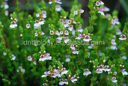 Eyebright Extract